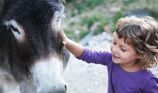 Randonner avec des ânes au Val Cenis