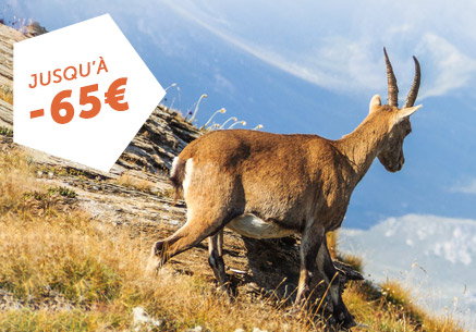 EXCLU WEB : JUSQU'À -65€ PAR CHAMBRE